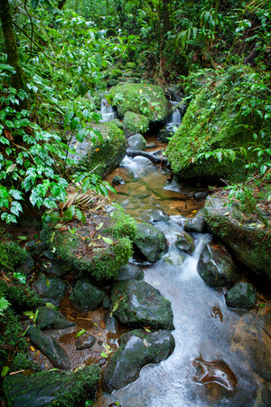 uncouth: Small Creek in the Monteverde cloud forest, Costa Rica Stock Photo