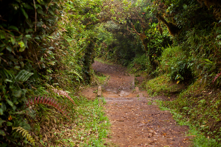 uncouth: Path in the Monteverde cloud forest, Costa rica