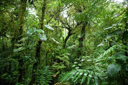 uncouth: Monteverde cloud forest, costa rica