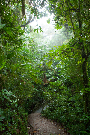 uncouth: Path in the Monteverde cloud forest, costa rica Stock Photo