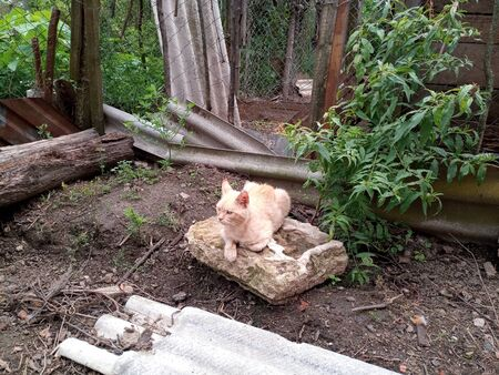 Domestic cats on the soil in the yard. Ginger cat and tabby cat.