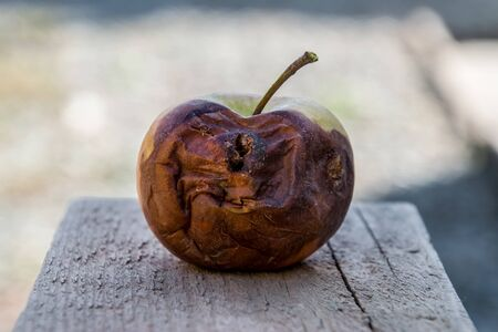 Rotten apple on the bench. Defeat apples. Spoiled crop.