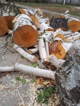 Sawed birch wood. Cut birch. Sawed birch wood. Cut birch.