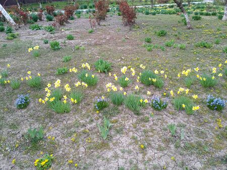Flowerbed with spring flowers. Flowers in the park on the flowerbed. Banco de Imagens