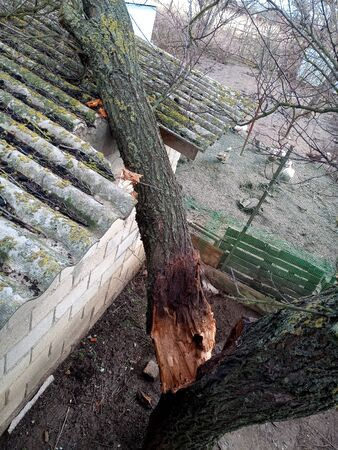 A windbroken apricot tree fell on the shed and broke the roof.