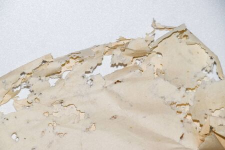 Paper swallowed with silverfish. Traces of wrecking silverfish on vinyl envelopes. lepisma