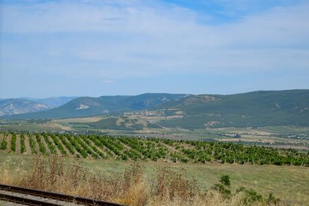 Fields with vineyards on trellises. a Hills with vineyards.