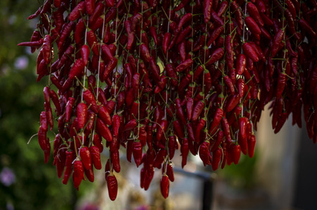 chili peppers: Strands of hanging red chili peppers