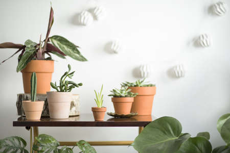 The modern room interior with a lot of different plants on the brown vintage shelf. White background with cotton lamps. Standard-Bild
