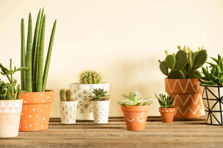 Stylish compostion of home garden filled a lot of cacti and succulent on wooden table. Yellow background wall with copy space for slogan.
