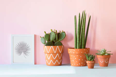 The stylish interior filled a lot of plants in different hipster clay pots with mock up poster frame. Modern plant compostion with pink background wall.