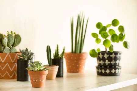 Stylish compostion of home garden filled a lot of cacti, succulent and plant in different hipster pots on marble table.
