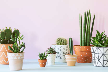 The stylish interior filled a lot of plants in different hipster clay pots. Modern plant compostion with pink background wall.