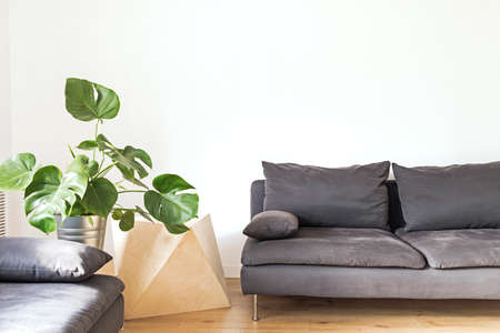 Stylish scandinavian room with geometric boxes, design sofa and big plants. Design room with white walls.