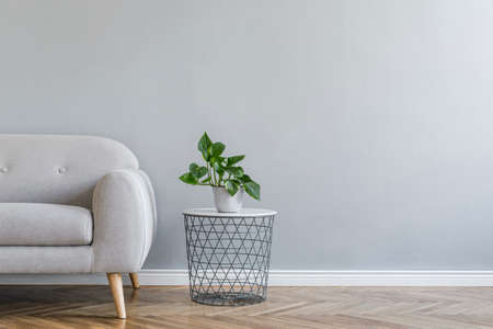 Minimalistic grey home interior with grey design sofa, table with plant. Copy space for inscription, mock up poster. Empty wall. Brown wooden parquet.
