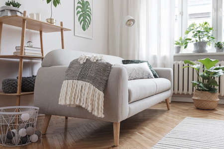 Stylish and minimalistic scandinavian interior with design sofa,tropicla plants, bookstand, coffee table, cozy blanket and carpet. White background walls, brown wooden parquet and modern lamp. Zdjęcie Seryjne - 118466780