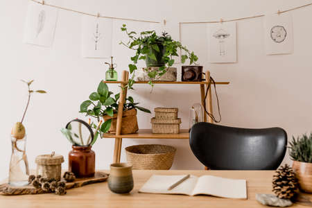 Stylish interior of home office space with wooden desk, forest accessories, avocado plant, bamboo shelf with a lot of plants and rattan baskets. Nice drawings on the white wall. Botanical home decor 版權商用圖片