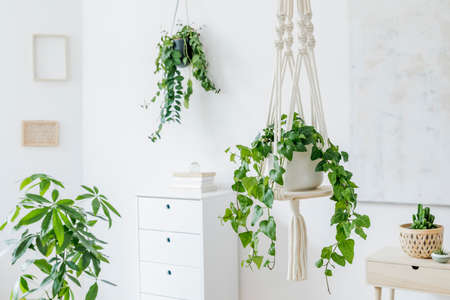 Stylish and minimalistic boho interior with crafted and handmade macrame shelf planter hanger for indoor plants, design furnitures, elegant accessories. Botany home decor of living room with plants.