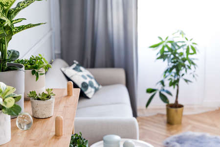 Stylish and minimalistic boho interior of living room with wooden shelf, gray sofa, design and elegant accessories. Botany home decor with a lot of plants. Bright and sunny space. Home garden.