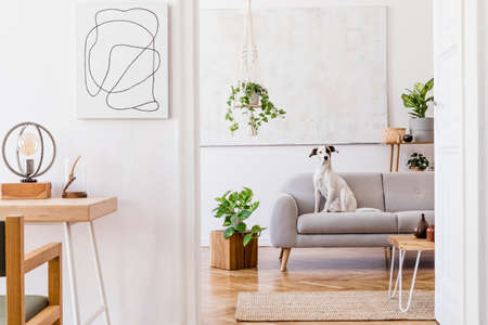 The modern boho interior of open room in cozy apartment with lying dog on the design gray sofa, desk, plants, flowers, wooden and elegant personal accessories. Mock up paintings concept. Home decor. 免版税图像