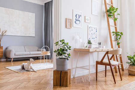 Stylish scandinavian interior of home open space with stylish chairs, wooden desk, shelf, plants, elegant accessories and mock up posters frames. Stylish home decor. Template. Dog lies on the carpet. Banque d'images