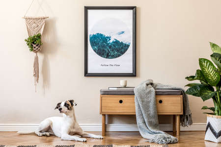 Scandinavian and design home interior of living room with wooden commode, rattan basket with plants, and elegant accessories. Stylish home decor. Template. Mock up poster frame. Dog lying on the floor.