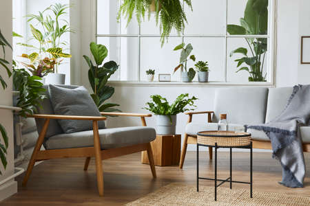 Modern scandinavian interior of living room with design gray sofa, armchair, a lot of plants, coffee table, carpet and personal accessories in cozy home decor. Template.