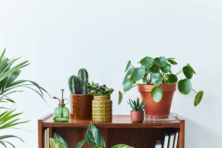 Stylish composition of home garden interior filled a lot of beautiful plants, cacti, succulents, air plant in different design pots. White wall. Copy space. Home gardening concept Home jungle. Stock fotó