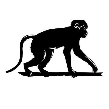 分離した白い背景の猿ブラック シルエットのベクター イラスト。  イラスト・ベクター素材