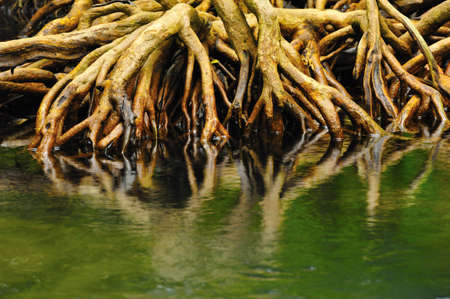 Root of water plant photo