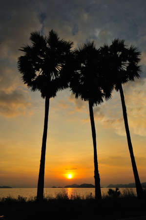 Coconut tree during sunset at Sattahip, Chonburi, Thailand photo