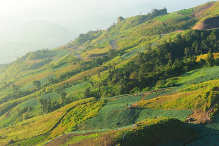 Landscape of cabbage field at Phuhin rongkla, Thailand photo