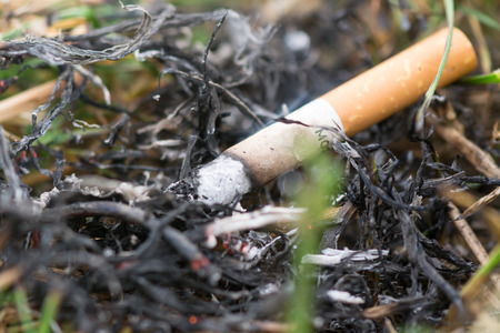incendiary: Cigarette Causing a dangerous fire on the forest