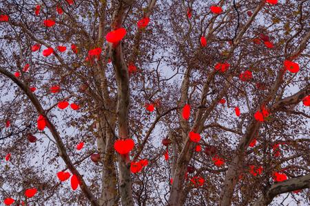 illuminated: A tree illuminated at Christmas