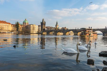vltava: Swans in Vltava river at sunset, Prague, Czech Republic