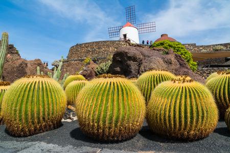 manrique: View of cactus garden in Guatiza village, Lanzarote, Canary Islands, Spain