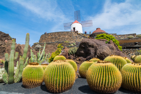 desert island: View of cactus garden in Guatiza village, Lanzarote, Canary Islands, Spain