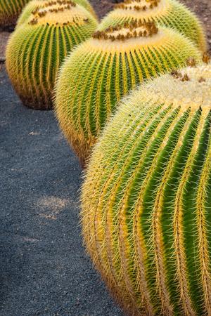lanzarote: Cactus garden in Guatiza, Lanzarote, Canary Islands, Spain Stock Photo