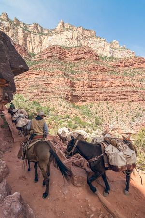 mule: Mule riders climbing up the Bright Angel Trail in Grand Canyon National Park, Arizona, Usa Stock Photo