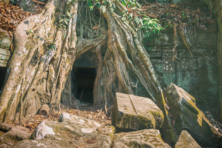 Amazing Ta Prom Khmer ancient Buddhist temple in jungle forest, Angkor Wat, Cambodia