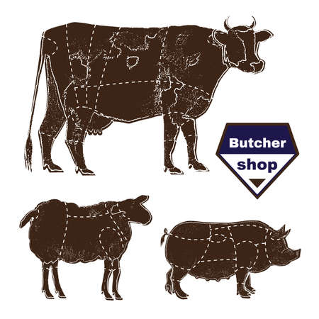 anatomic: Set of farm animals for butcher shop with anatomic cut hand-drawn with chalk on blackboard