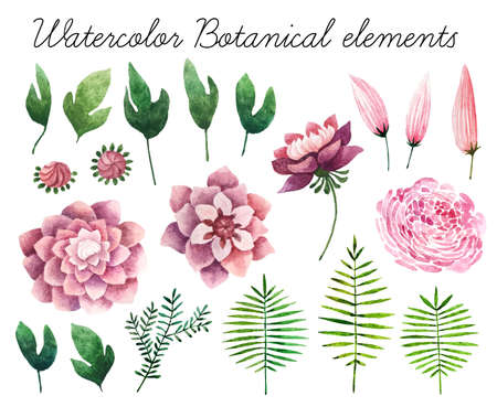 aster: Big set of watercolor botanical elements. Beautiful botanical elements isolated on white background. Hand drawn herbs and flowers for your design.