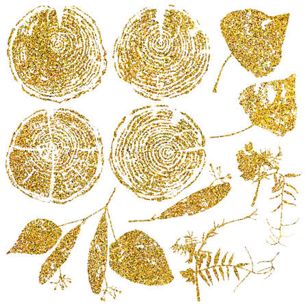 rings on a tree cut: Vector wood splits and herbarium set isolated on white backdrop. Vector wood splits and herbarium set with gold glitter for your design. Illustration