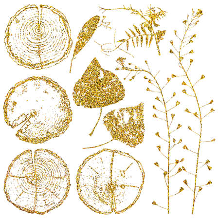 Vector wood splits and herbarium set isolated on white backdrop. Vector wood splits and herbarium set with gold glitter for your design. Illustration