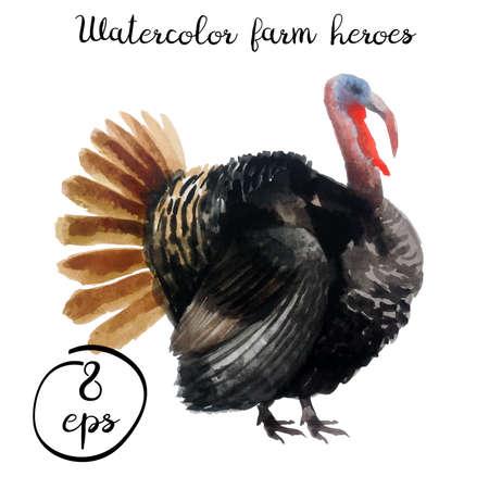 Vector farm poultry watercolor