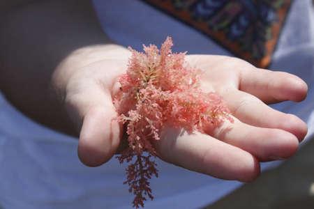 plankton: planta marina en la mano