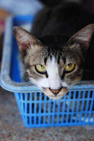 cat looking Stock Photo - 13850111