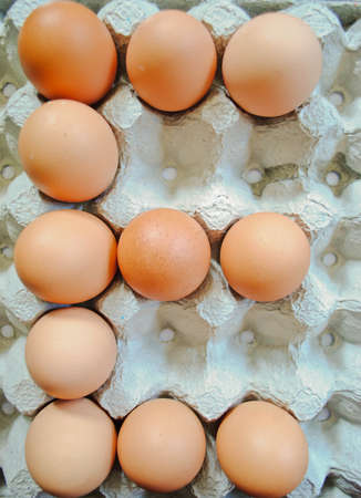 Eggs in the panel photo