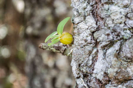 bounding: small orchid bounding with the tree Stock Photo