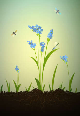 forget me not: Forget-me-not flowers growing on soil, vector Illustration